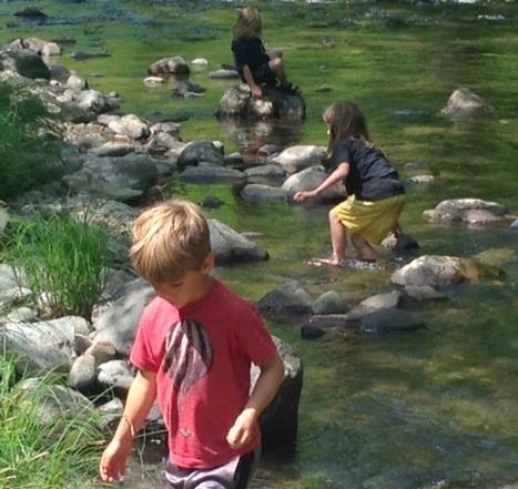 bears in the creek